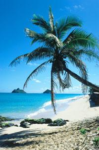 Hawaii Englisch Sprachreise
